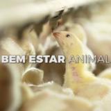 sistema-de-integração-rivelli-produção-de-frangos-thumb